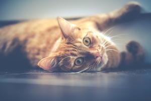Katze auf dem Boden