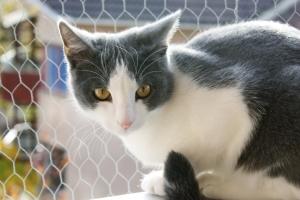 Katzensicherheitsnetz