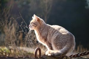 Outdoor Katze