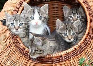 Kitten mit Korb