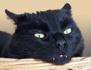 Beruhigung für Katzen