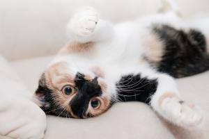 gemütliche Katze