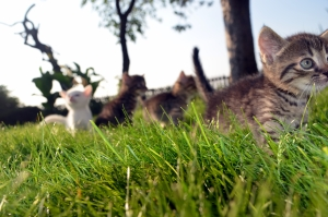 Kitten draußen
