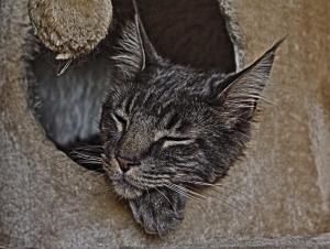 Beruhigungsmittel für Katze