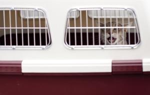 Frachtbox Katze