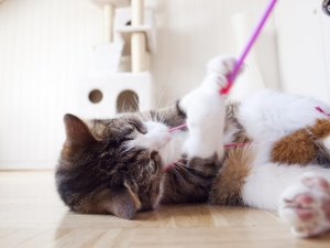 Artgerechtes Katzenspielzeug