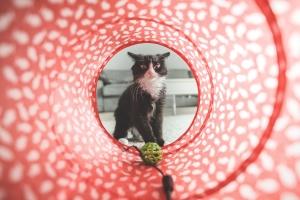 Katzenrascheltunnel