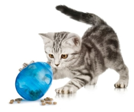 PetSafe FUN-EGG-28 Katzenspielzeug Funkitty Egg-Cersizer - 1